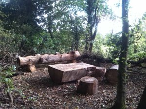 Streatly Wild Wood-2
